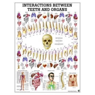 Cartel de la Osteopatía Craneosacral 70x100 cm