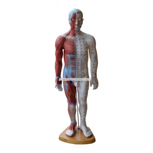 Modèle homme 50 cm