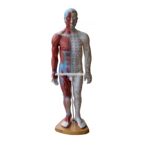 Modell mann auf die 50-cm