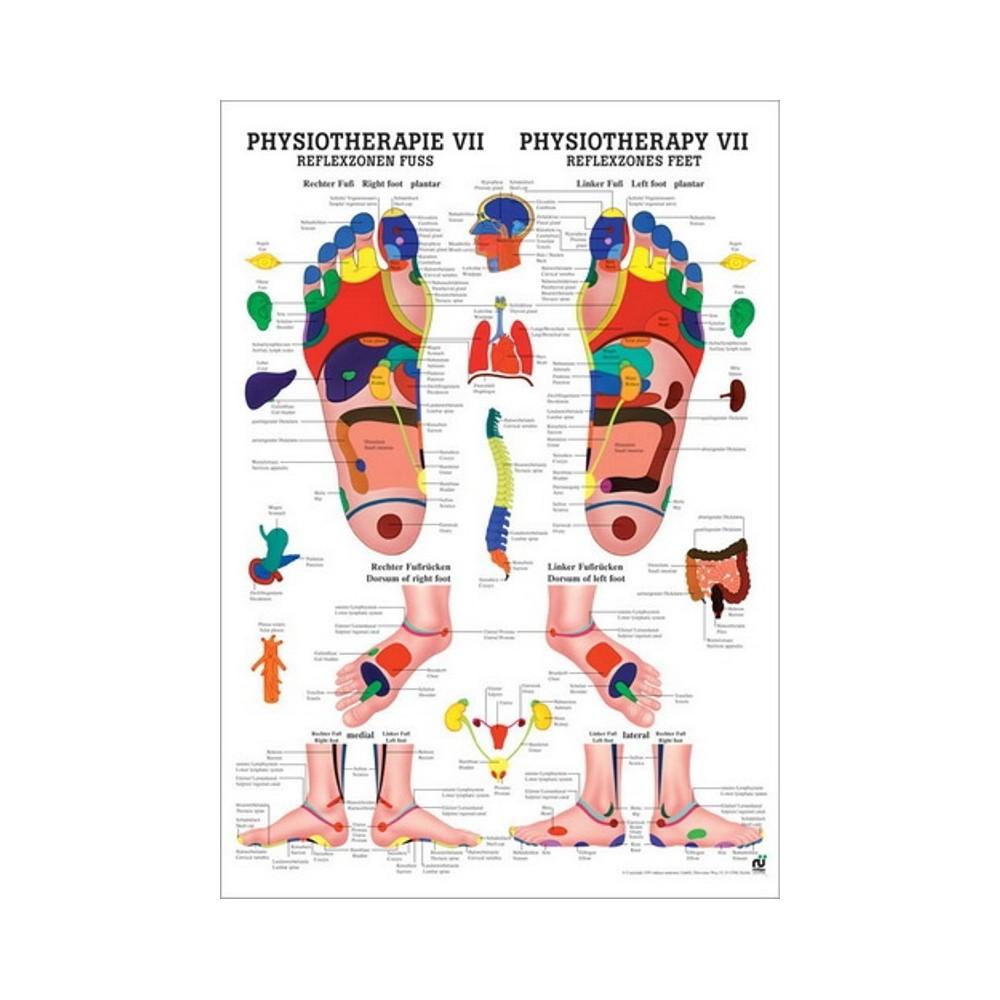 Mappa riflessologia delle mani 50x70