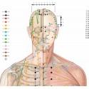 El mapa de los puntos de acupuntura 70x100 cm