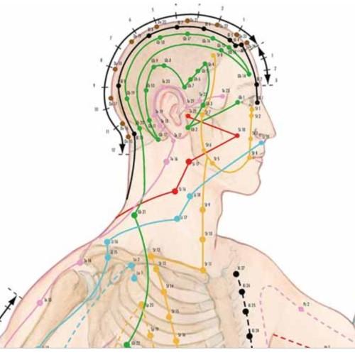 Anzeigen der akupunkturpunkte 70x100