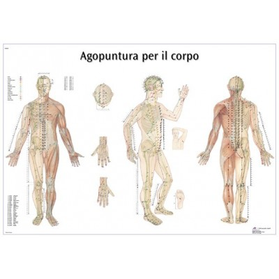 La carte des points d'acupuncture 70x100