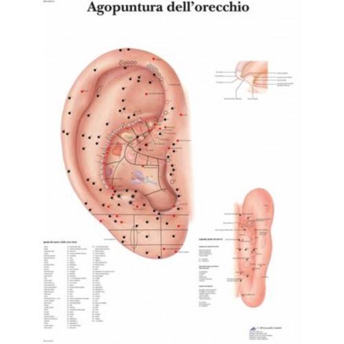 Poster akupunkturpunkte des kopfes 50 x 70
