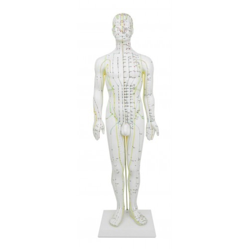 Modelo de hombre de 50 cm