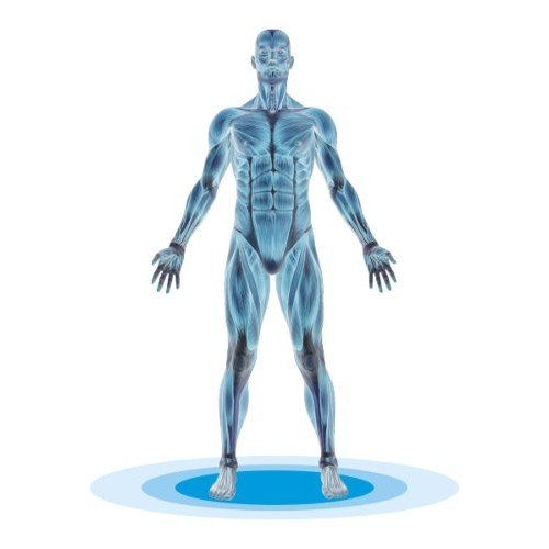 FIT THERAPY POSTURE
