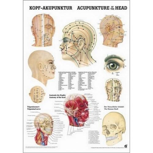 Affiche des points d'acupuncture de la tête 50 x 70