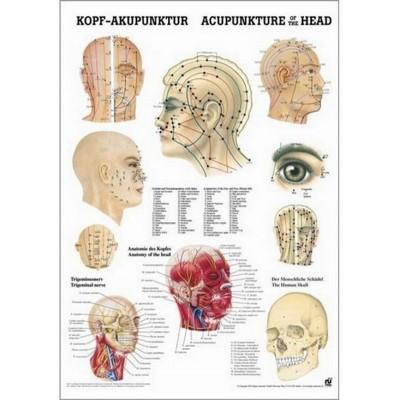 Cartel de los puntos de acupuntura de la cabeza 50 x 70