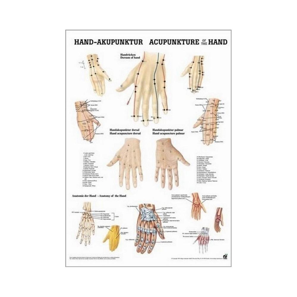 Affiche des points d'acupuncture de la main 50 x 70