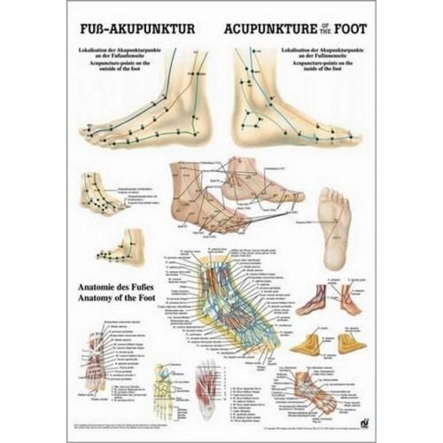 Poster agopunti del piede  50 x 70