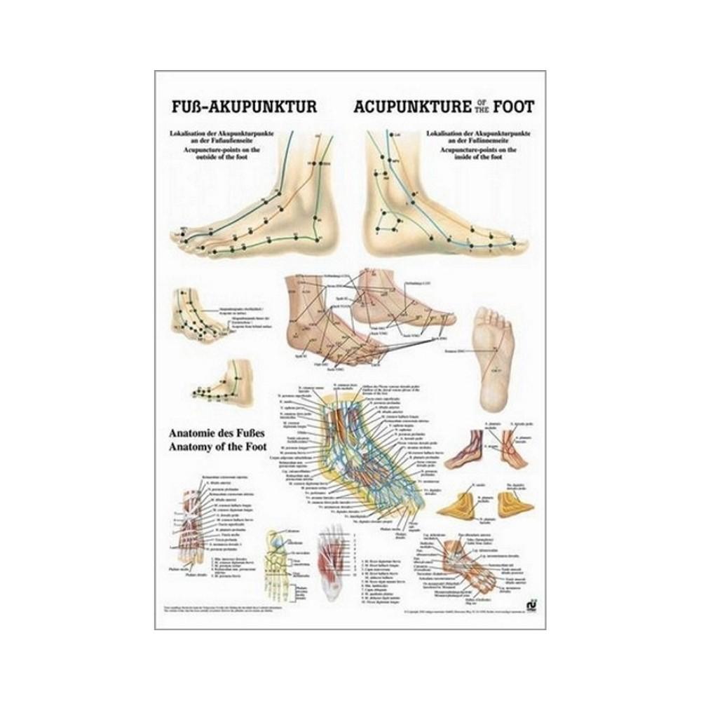 Mini póster de los puntos de acupuntura 34 x 24