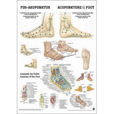 Poster acupoints of the foot 34x24