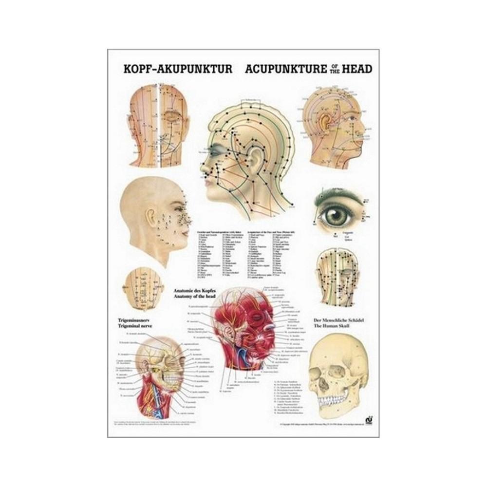 Mini poster points d'acupuncture 34 x 24