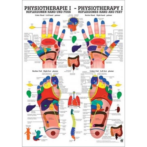 La carte des pieds et des mains