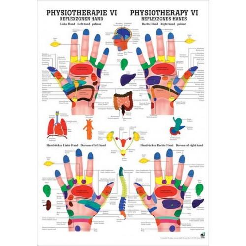 La carte des points réflexes des pieds et des mains 50x70