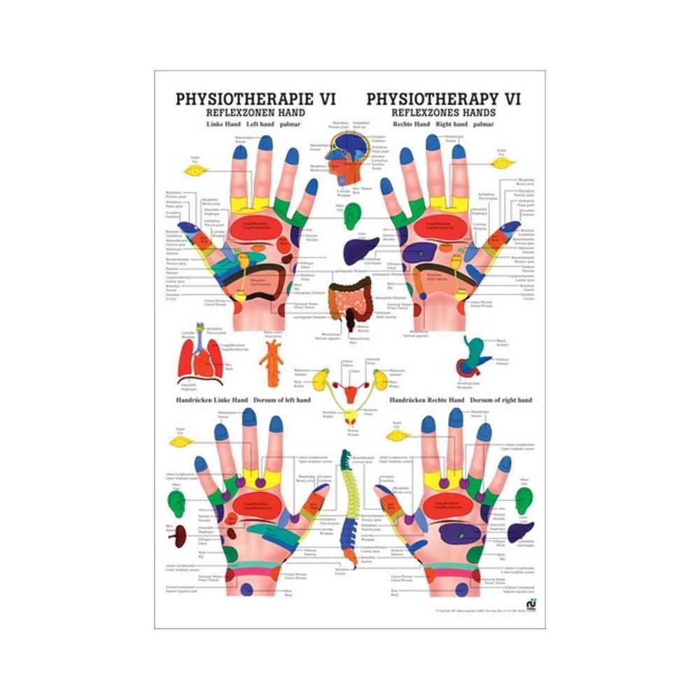 Karte der reflexzonen der füße und hände, 50x70