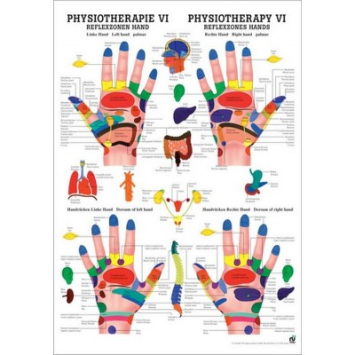 Mappa dei punti riflessi di piedi e mani 50x70