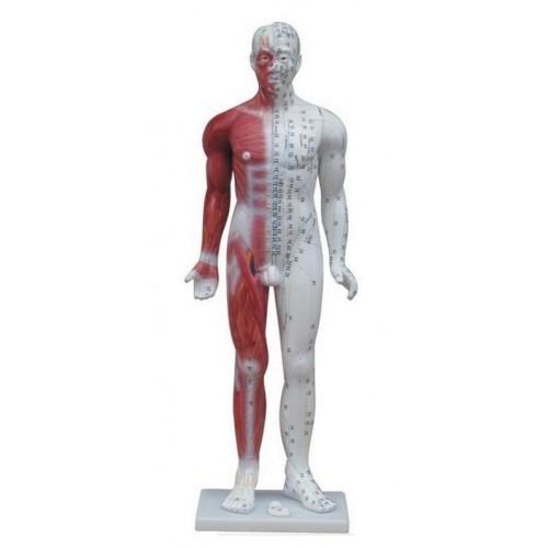 Modèle homme 84 cm