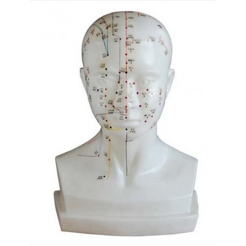 Modello uomo 84 cm