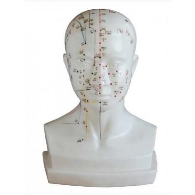Modell mann 84 cm