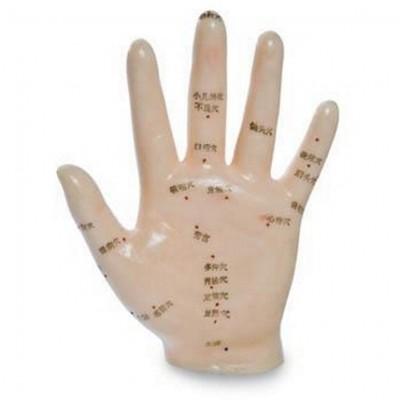 Hand-muster 13 cm